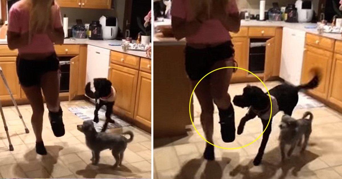taa.jpg?resize=636,358 - Un chien adorable saute autour de son propriétaire qui a un pied dans le plâtre.