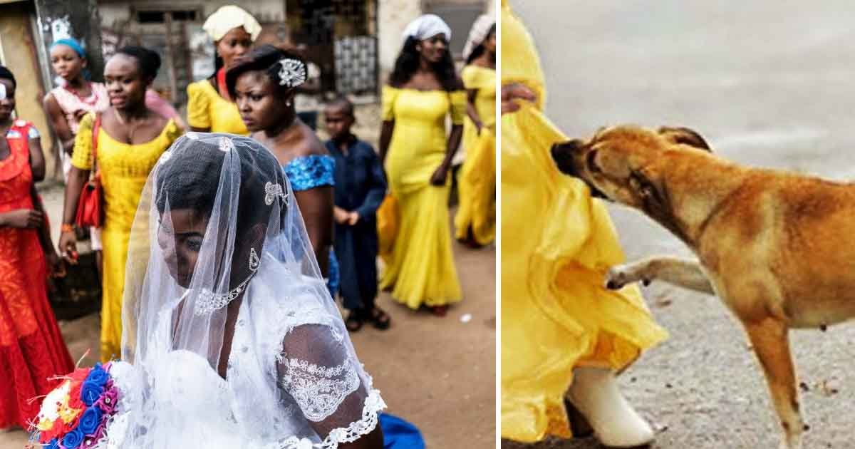 tast.jpg?resize=1200,630 - Teenage Suicide Bomber's Mission To Detonate Explosives At A Nigerian Wedding Fails As A Brave Dog Attacks Her