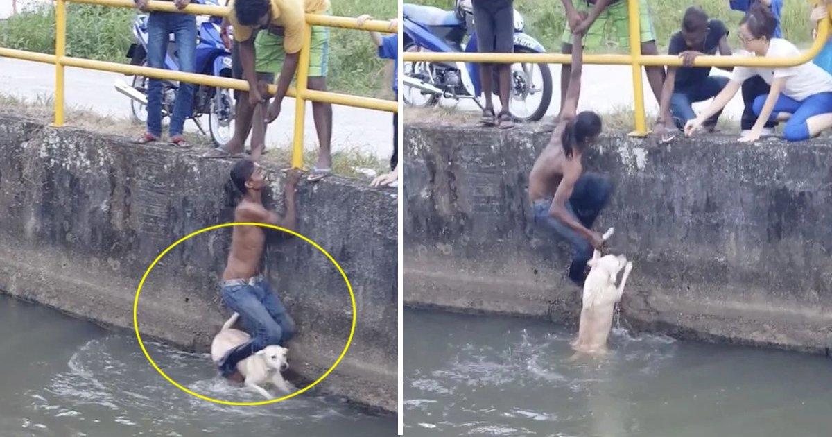tata 6.jpg?resize=636,358 - [Vidéo] Un jeune homme passe par-dessus une barrière de sécurité pour sauver un chien qui se noie.