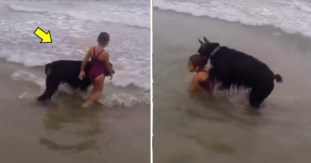 """tataaa.jpg?resize=1200,630 - Un chien en mode """"Garde et protection"""" empêche la petite fille de s'aventurer trop loin dans les vagues"""