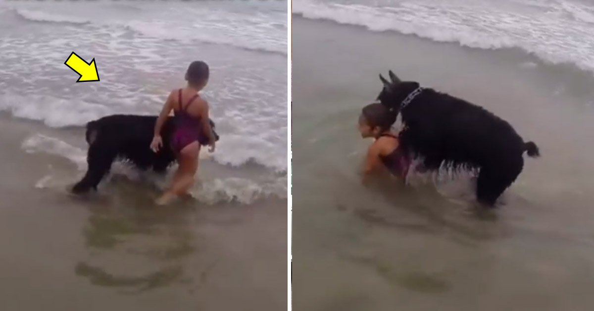 tataaa.jpg?resize=574,582 - Dog In 'Guard And Protect' Mode As It Prevents Little Girl From Venturing Too Far Into The Waves