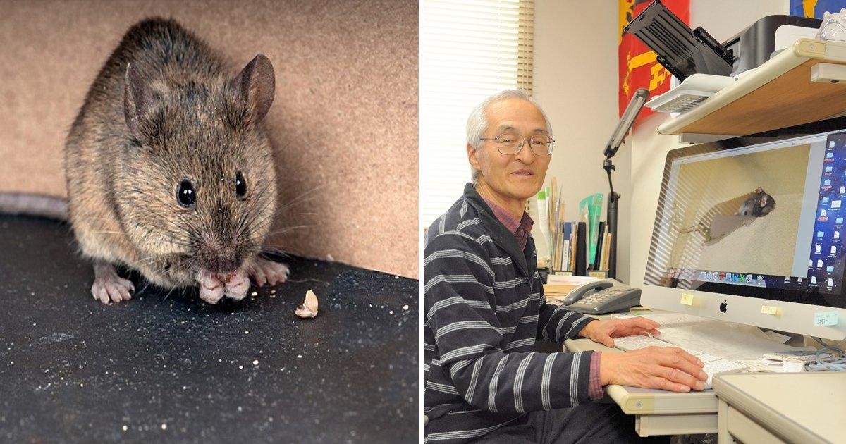 tatataaa 1.jpg?resize=636,358 - Signs Of Aging Reversed In Mice By An Antibiotic