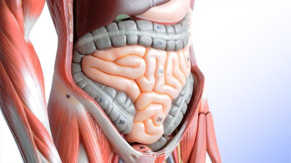 ヒトの腸에 대한 이미지 검색결과