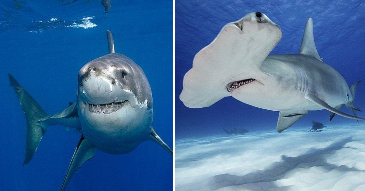 ttt 2.jpg?resize=1200,630 - 11 espèces de requins terrifiants se dirigent vers les côtes britanniques