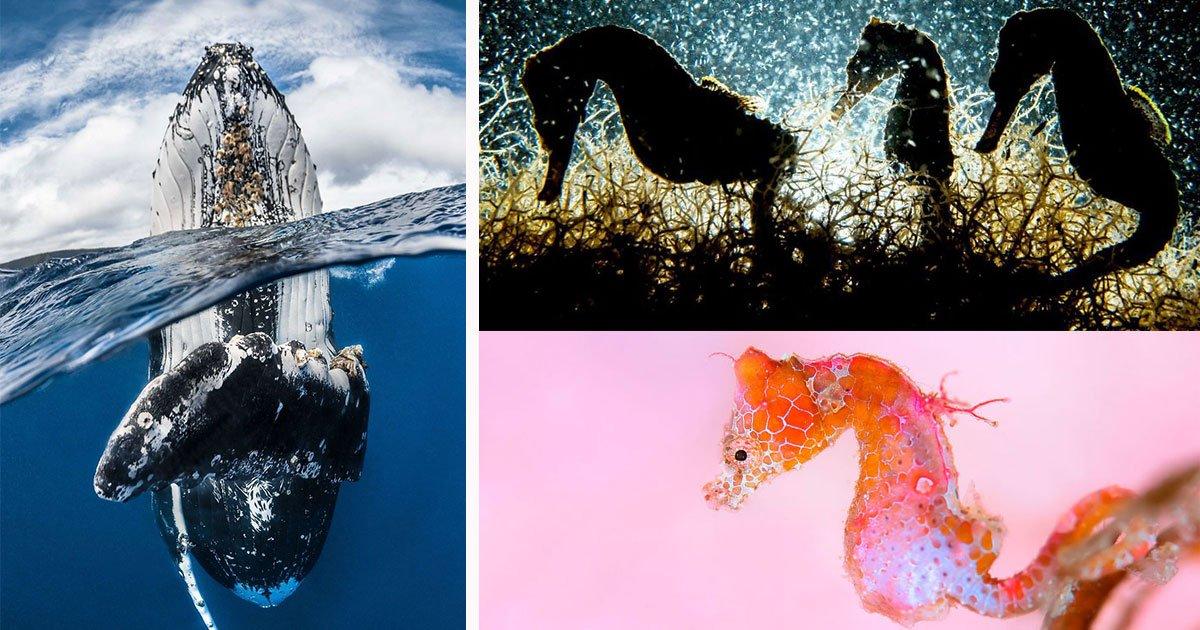 underwater photography contest winners imag.jpg?resize=300,169 - Vencedores do concurso de fotografia subaquática de 2018 são surpreendentes demais para expressar em palavras