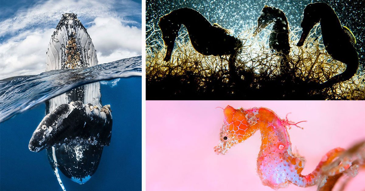 underwater photography contest winners imag.jpg?resize=636,358 - Winners of 2018 Underwater Photography Of The Year Contest Are Too Amazing For Words
