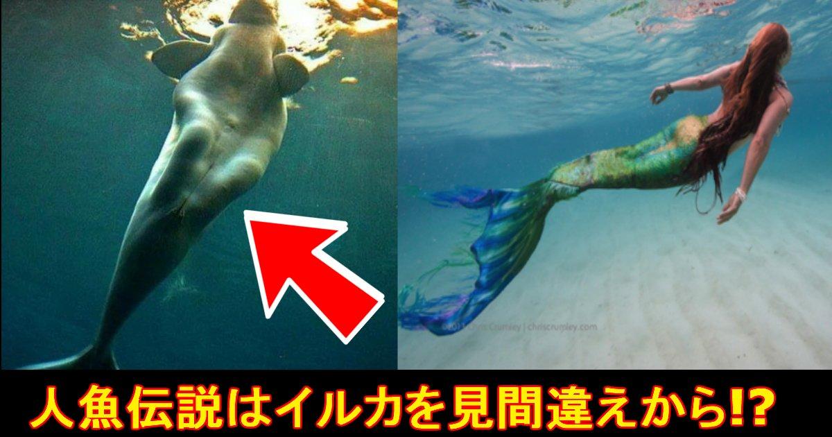unnamed file 19.jpg?resize=300,169 - 【人魚伝説の真相は!?】人魚伝説の存在はこの『イルカ』だった!?