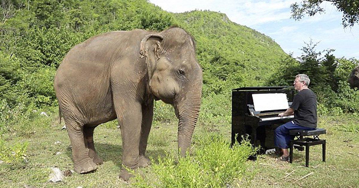 """untitled 11.jpg?resize=300,169 - """"정글에서 '피아노'를 연주하자 앞을 못보는 코끼리가 '춤'을 췄다"""" (영상)"""
