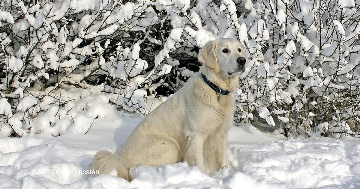 vaagustar 8.jpg?resize=648,365 - Se ha hecho viral la increíble hazaña del perro que salvó dos vidas sin dudarlo