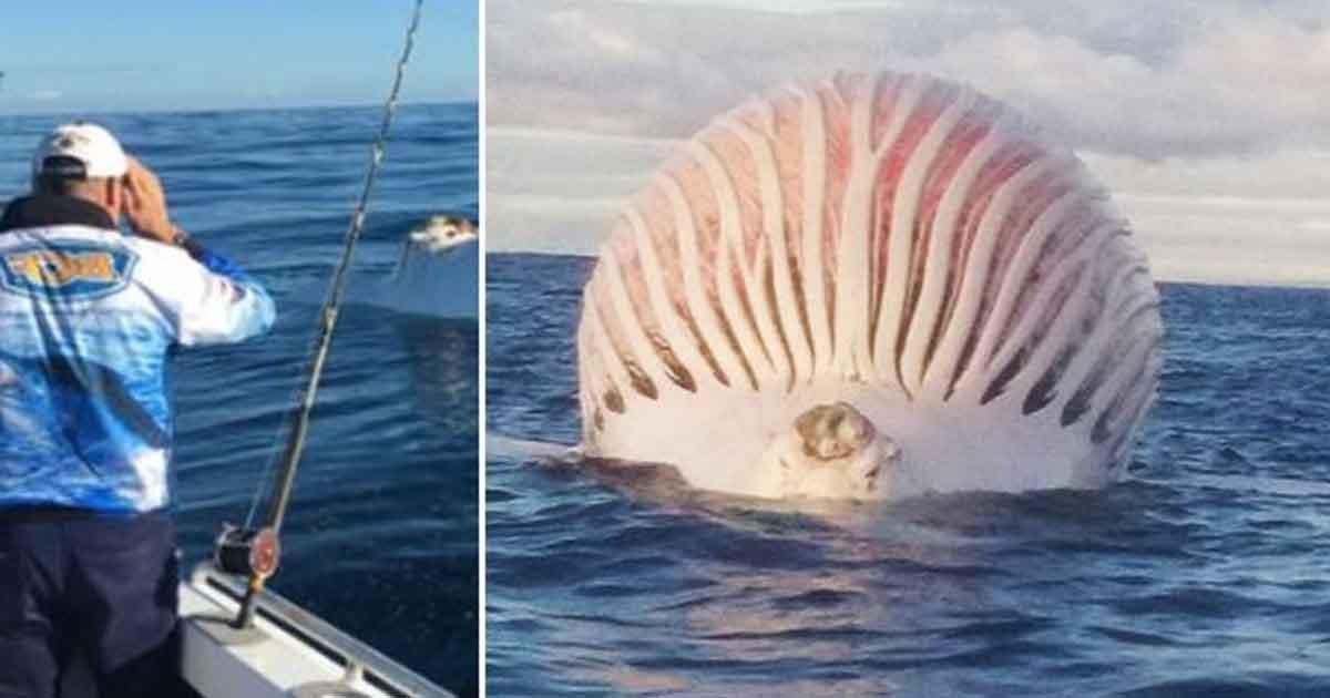 vs.jpg?resize=300,169 - Père et fils en sortie pêche ont repéré une baleine morte de la taille d'une montgolfière