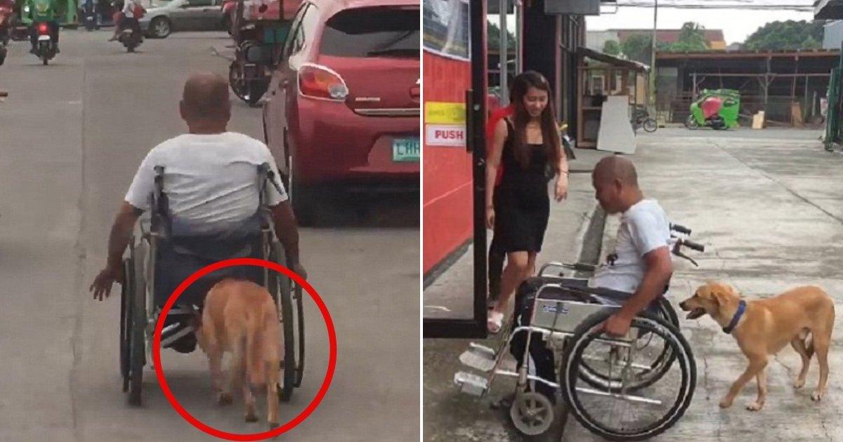 w3 side.jpg?resize=1200,630 - Ce n'est jamais trop demander: un couple filme un chien loyal poussant le fauteuil roulant de son maître handicapé le long de la route