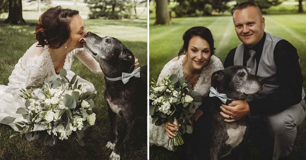 wes.jpg?resize=1200,630 - Un chien aide sa propriétaire à combattre le cancer avant qu'il en ait un. Il marche avec sa propriétaire dans l'allée lors de son mariage