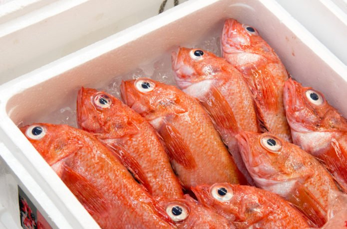 赤魚 アコウダイ에 대한 이미지 검색결과