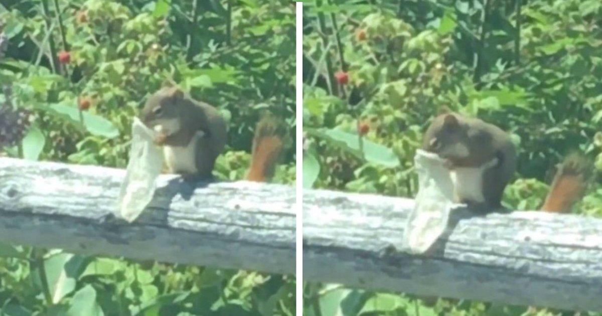 wrong food.jpg?resize=1200,630 - Un écureuil sur une plage grignote l'intérieur d'un préservatif usagé