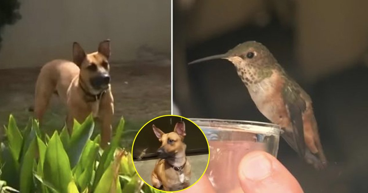 yuyu.jpg?resize=636,358 - Feral Dog Help Save A Hummingbird; Today They Are The Best Of Friends