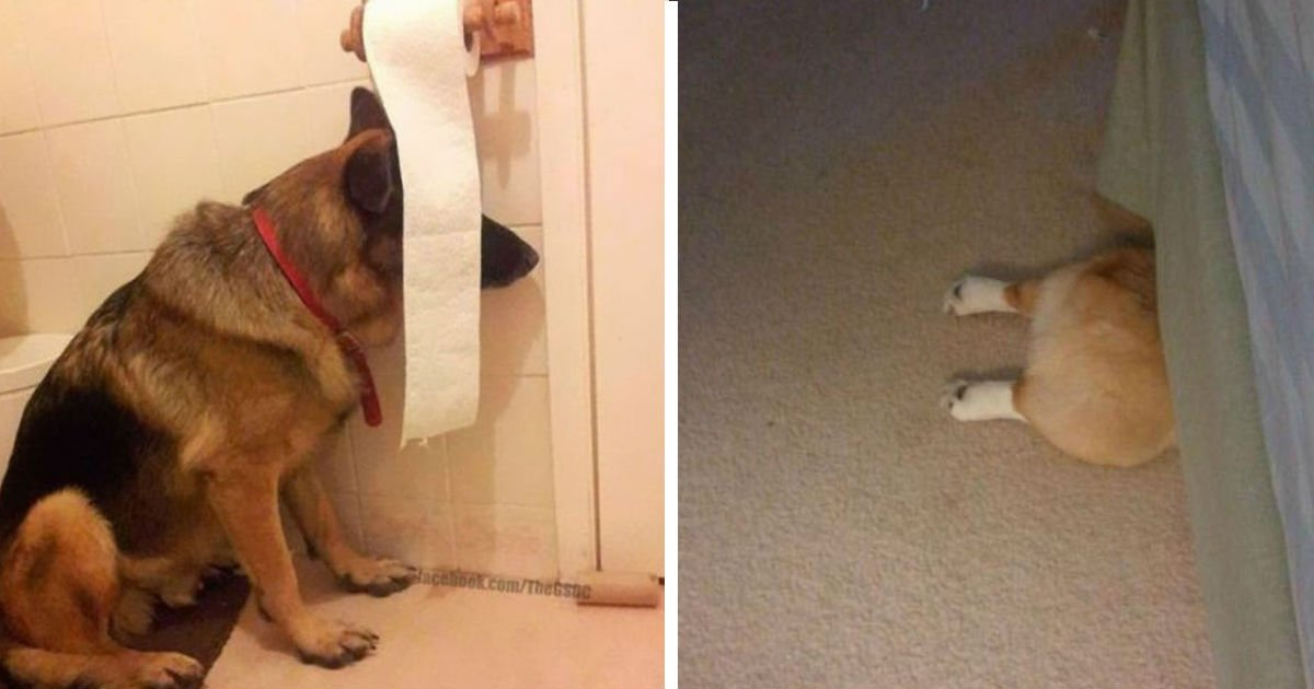 00002234.jpg?resize=1200,630 - 20 dogs who think they've found the perfect hiding place