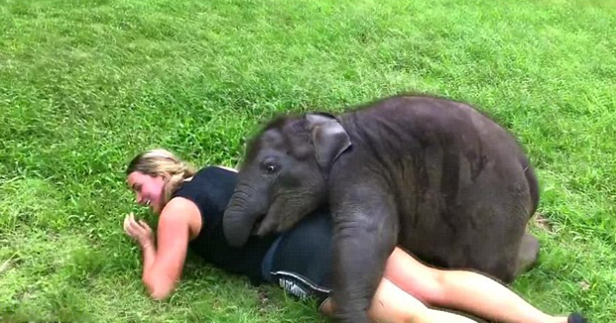 1 108.jpg?resize=636,358 - This Baby Elephant Just Can't Stop Hugging People
