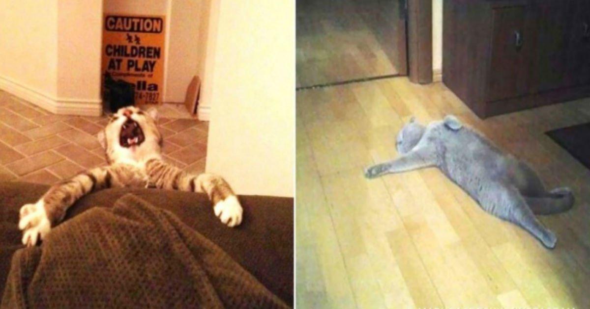 1 170.jpg?resize=1200,630 - 17 urkomische Katzen, die einen Oscar verdienen