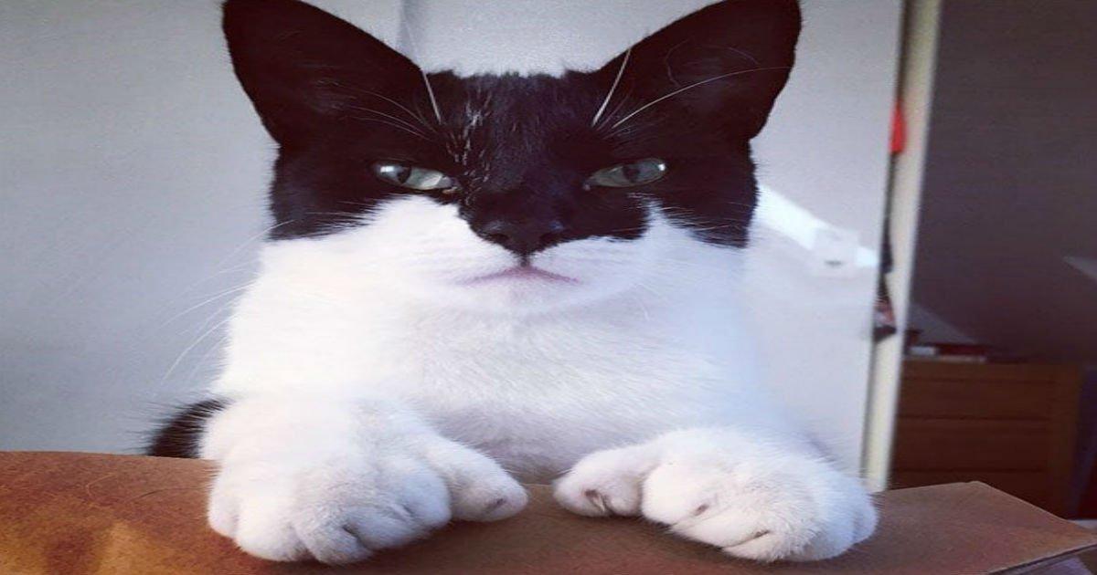 1 173.jpg?resize=636,358 - 39 verrückte Katzen mit einzigartigen Fellmarkierungen wie keine, die du vorher gesehen hast.