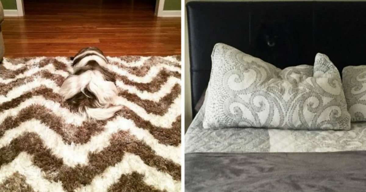 1 188.jpg?resize=1200,630 - 18 Photos Proving That Dogs Are Basically Stealthy Ninjas