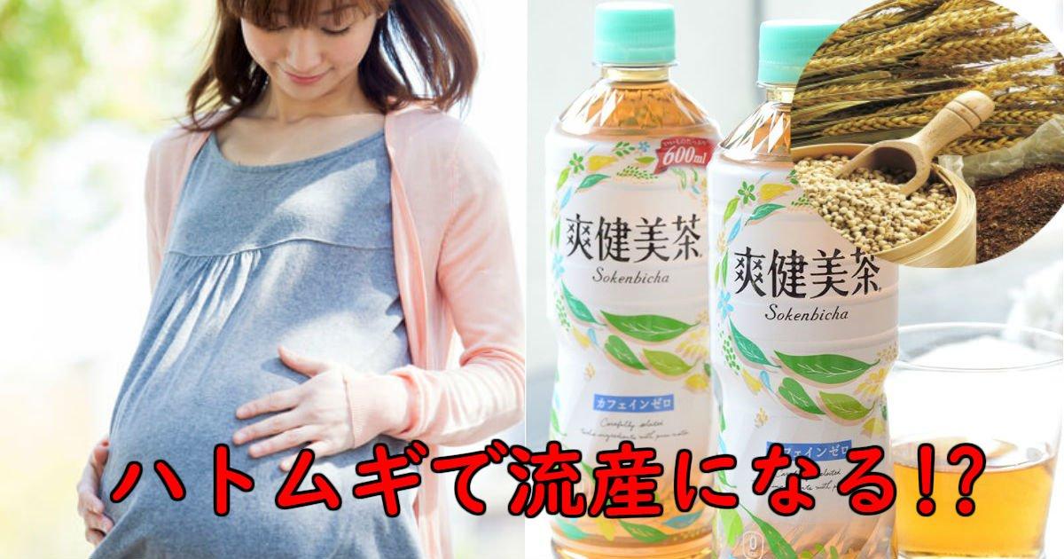 1 206.jpg?resize=636,358 - ハトムギで流産するのはデマ!!妊婦に爽健美茶は悪影響?医学的根拠無し!!