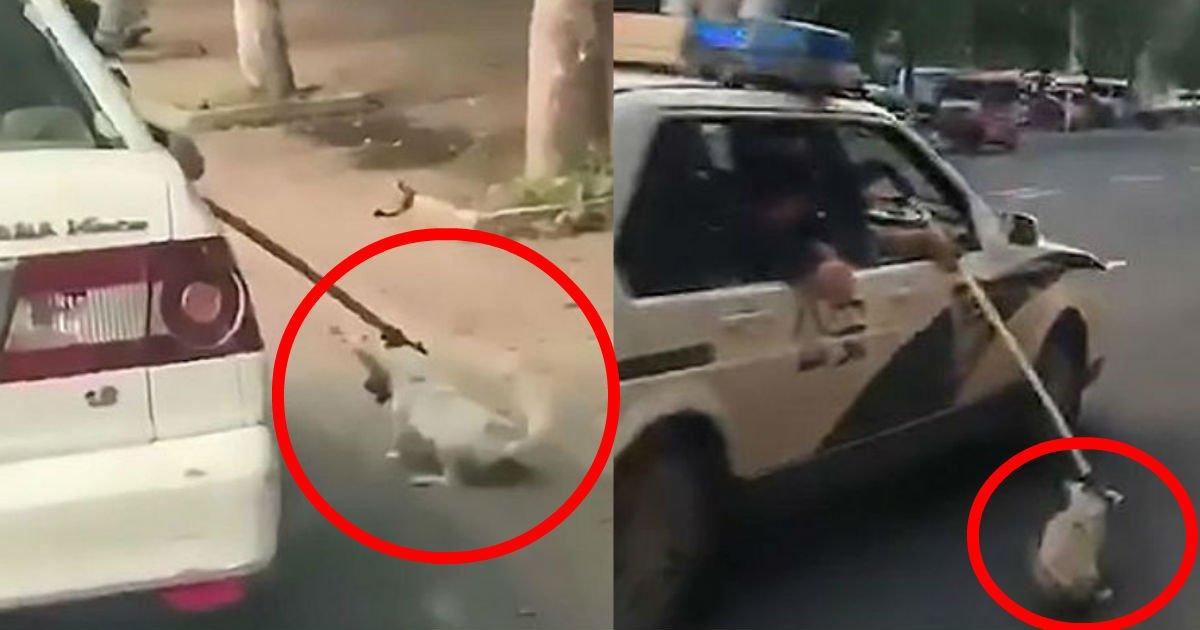 1 43.jpg?resize=412,232 - ノラ犬を疾走する車に「縛って」引きずる?!動物虐待の「非常識」警察官