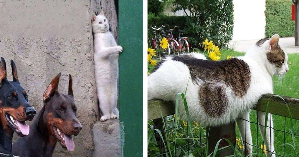 100 14.jpg?resize=1200,630 - 31 Fotos, die beweisen, dass Katzen lustige Kreaturen sind.