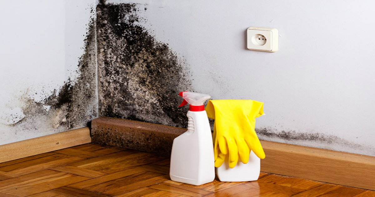 11 26.jpg?resize=636,358 - Black Mold: 4 Signs It's In Your Home & How to Get Rid of It