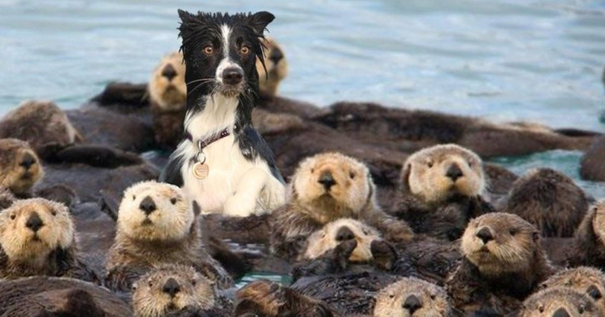 1111111111111.jpg?resize=636,358 - 16 Hilarious Animals That Can't Decide What Species They Belong To