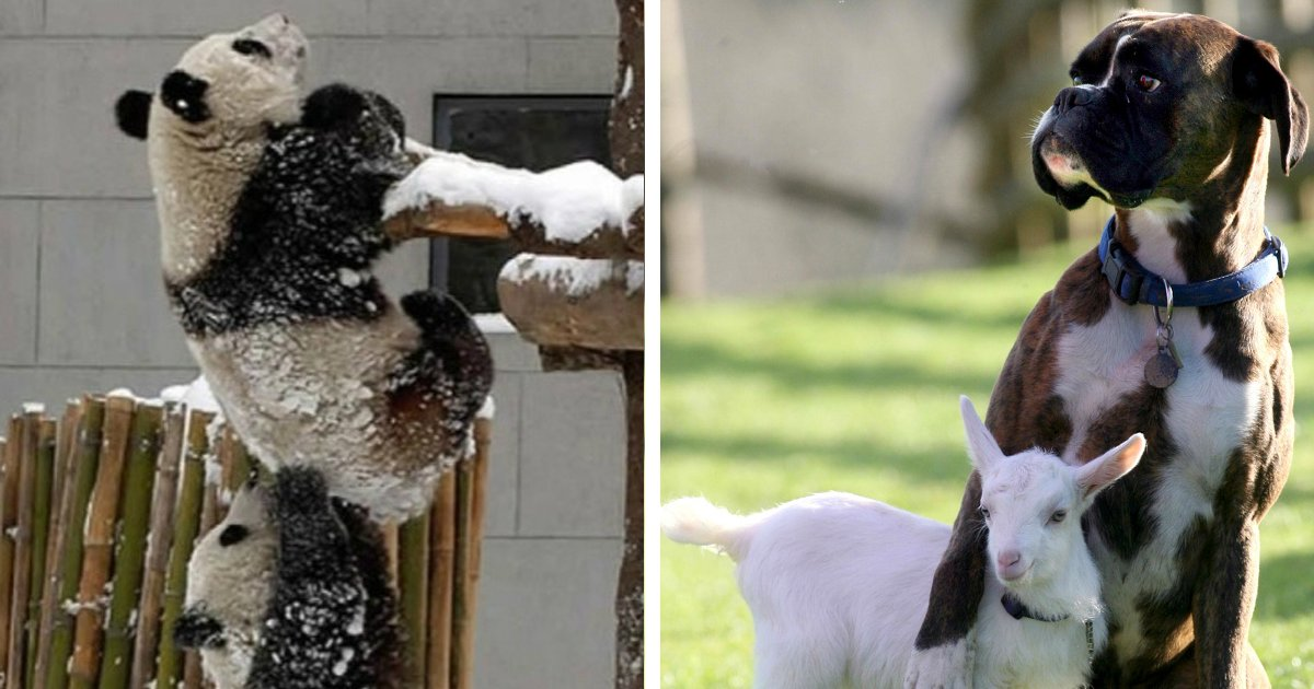 123.jpg?resize=1200,630 - 20+ Hilarious Times Animals Mastered the Art of Teamwork