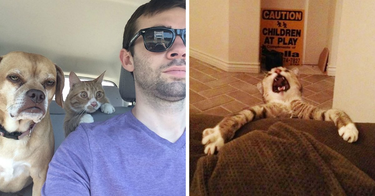18 2.jpg?resize=1200,630 - 32 Hilarious Cats Who Are So Dramatic They Deserve An Oscar