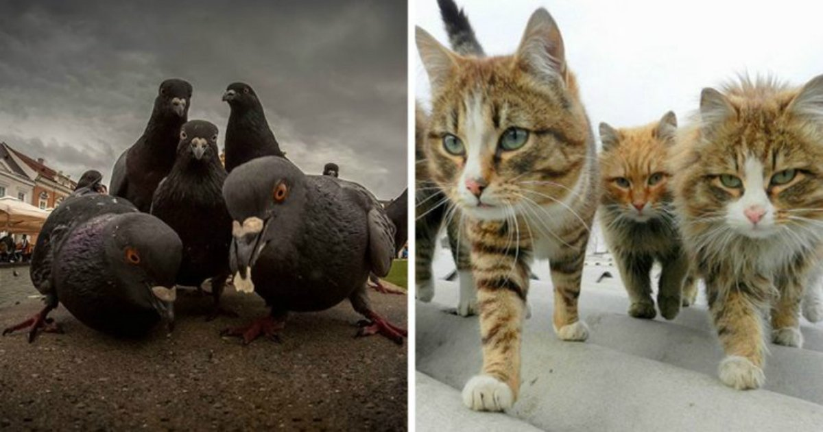 19 1.jpg?resize=636,358 - 23 Animals Looking Like They're Going To Drop The Best Album Of The Year