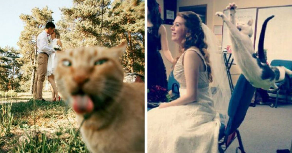 200.jpg?resize=1200,630 - 24 Of The Most Hilarious Cat Photobombs Ever Happened