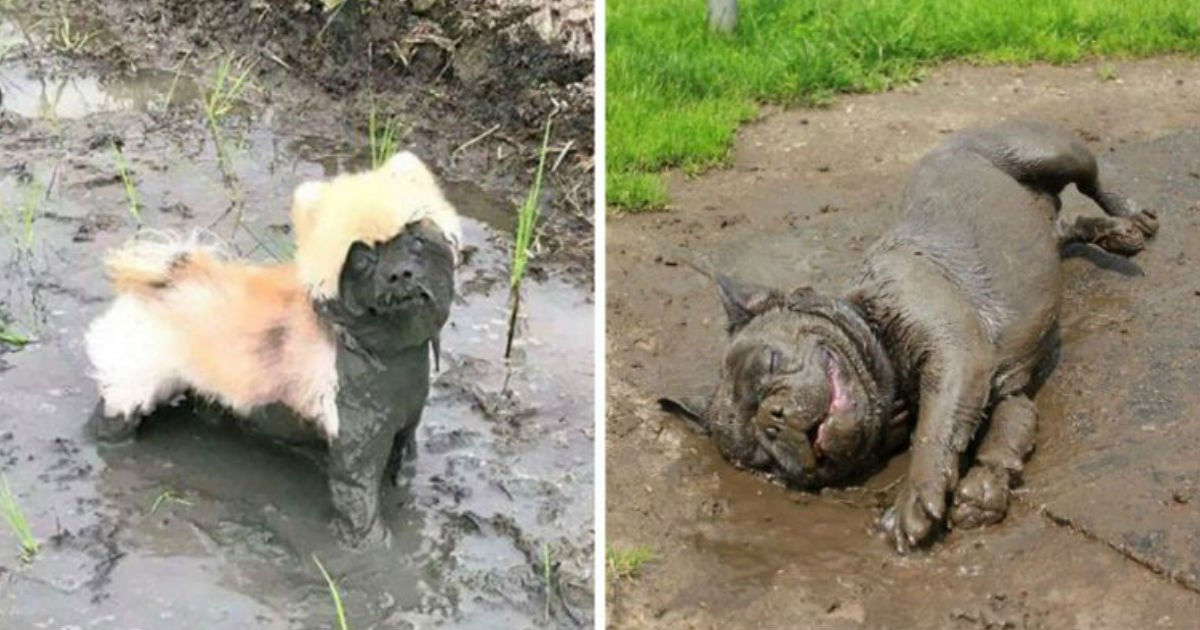 201.jpg?resize=1200,630 - 28 Times Letting Your Dog Play In The Mud Wasn't The Best Idea