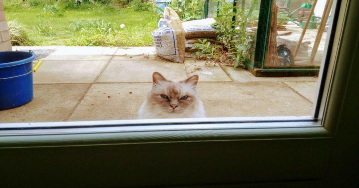 3 117.jpg?resize=1200,630 - 20+ Mèmes hilarants que chaque propriétaire de chat comprendra.