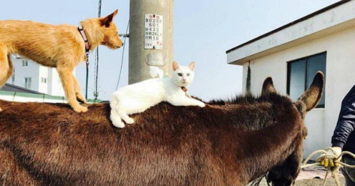 3 46 1.jpg?resize=648,365 - '당나귀+개+고양이'...제주도 명물로 등극한 동물 삼총사