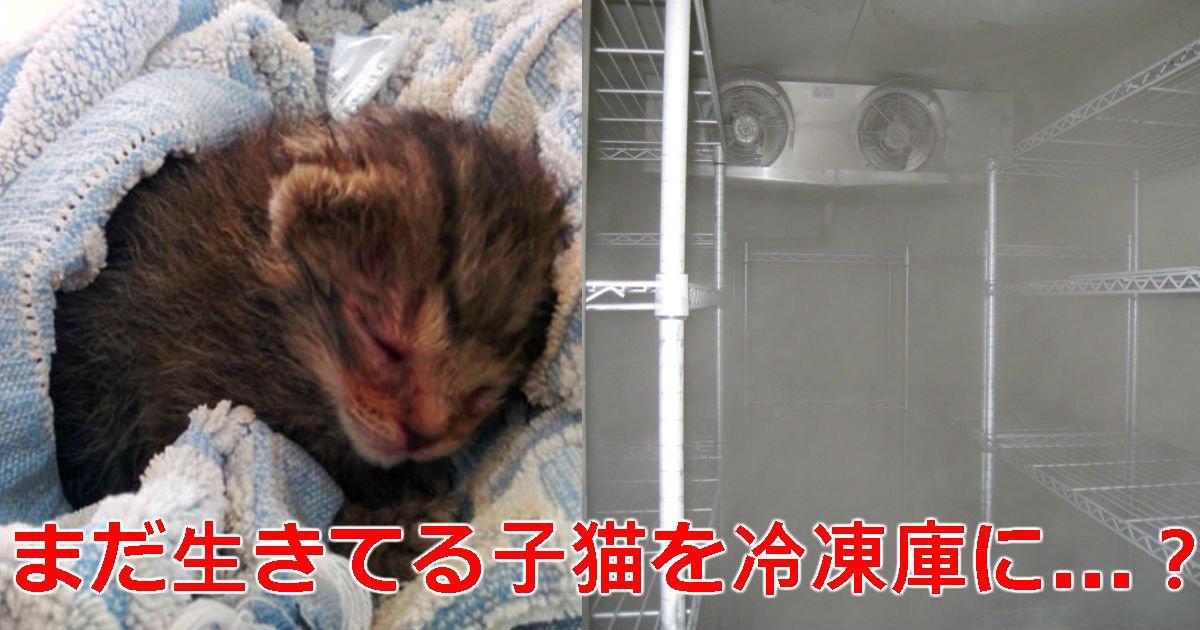 3 71.jpg?resize=1200,630 - 治療費節約「生きている」子猫を生きたまま「冷凍庫」に入れた動物保護センターのスタッフ
