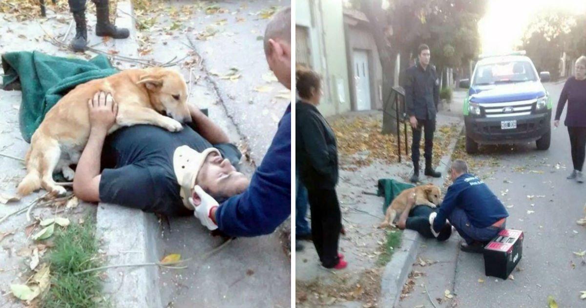 3 94.jpg?resize=412,232 - Les chiens montrent ce qu'est l'amour inconditionnel et nous en sommes émerveillés