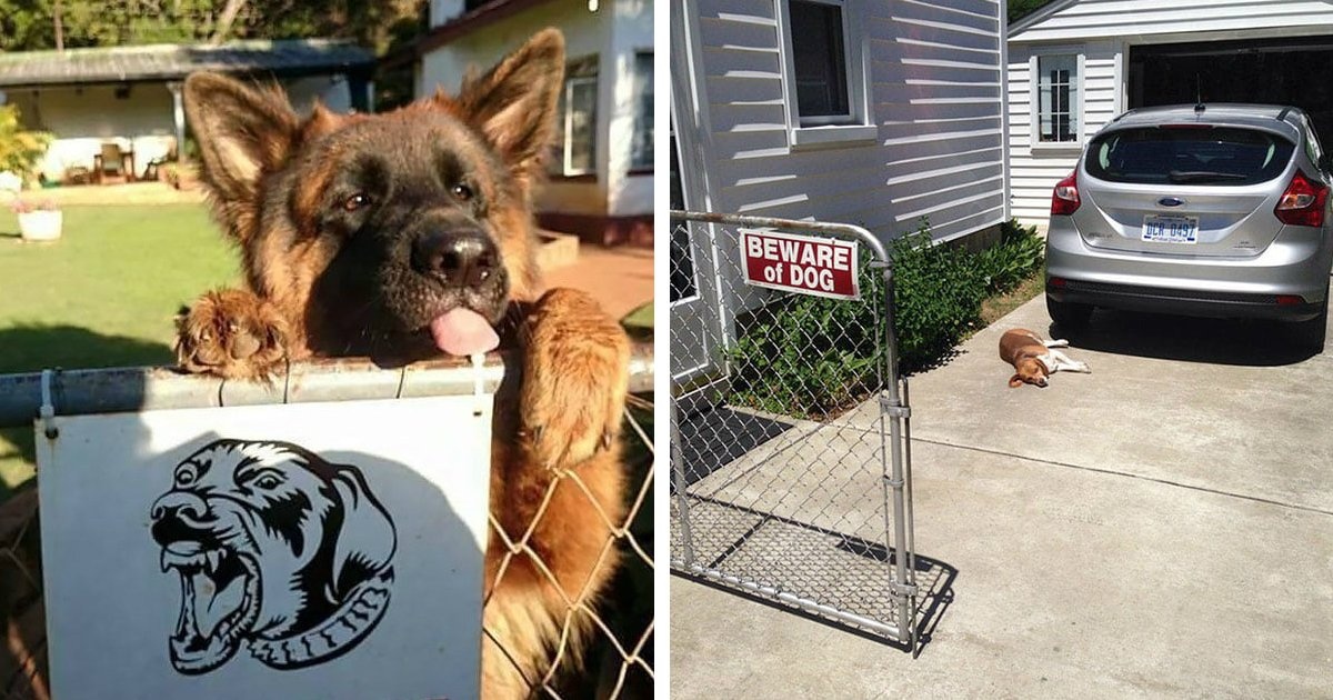 45 5.jpg?resize=636,358 - 40 Hilarious Dogs Behind Those 'Beware of Dogs' Signs