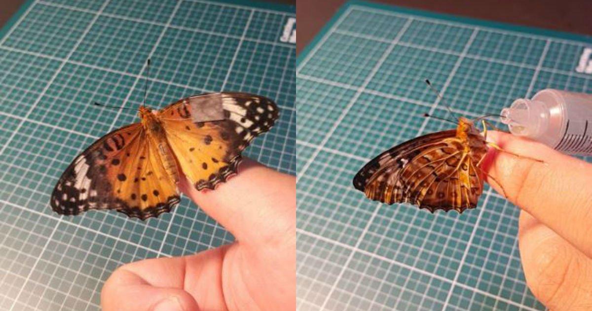 5b693bb75bc56.jpg?resize=300,169 - 온라인 커뮤니티에 등장한 '나비'계의 '화타', 나비 날개 수술 후기.jpg