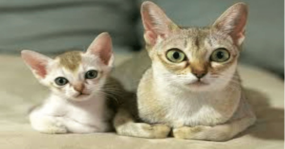 6 21.jpg?resize=1200,630 - 40+ Cats Who Have Miniature Versions That Look Just Like Them