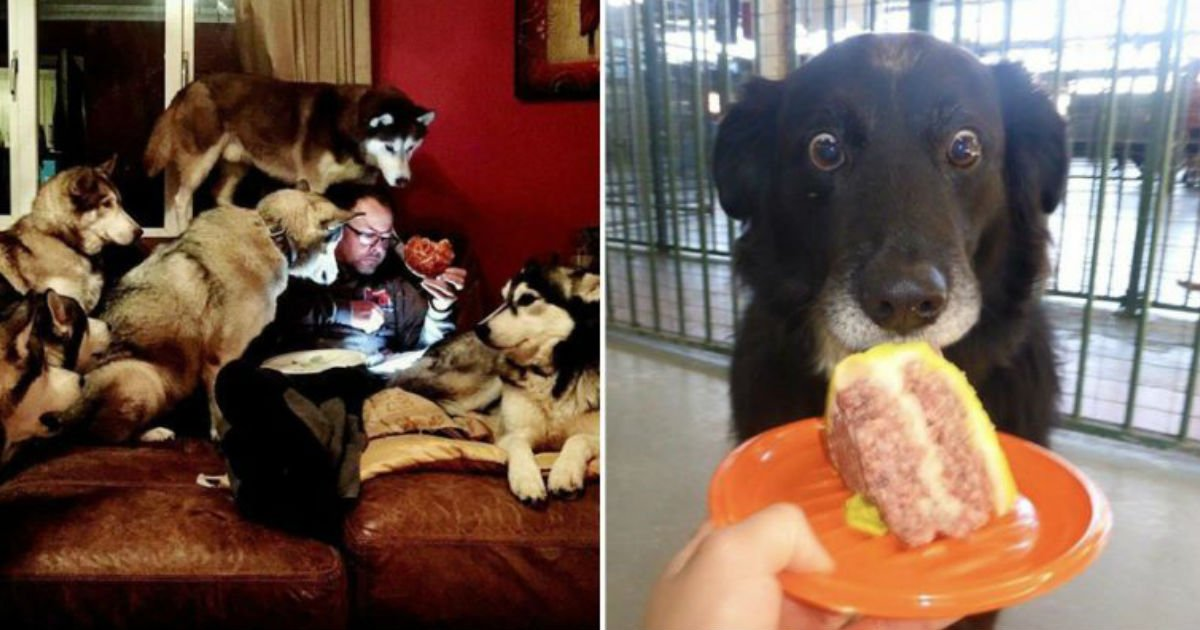 6 31.jpg?resize=1200,630 - 15+ Hilarious Animals Who'd Do Anything For Your Food