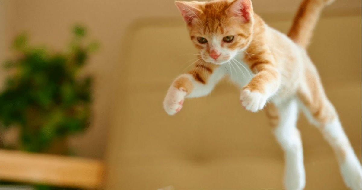 7 17.jpg?resize=1200,630 - 50 Cat Behaviors Explained