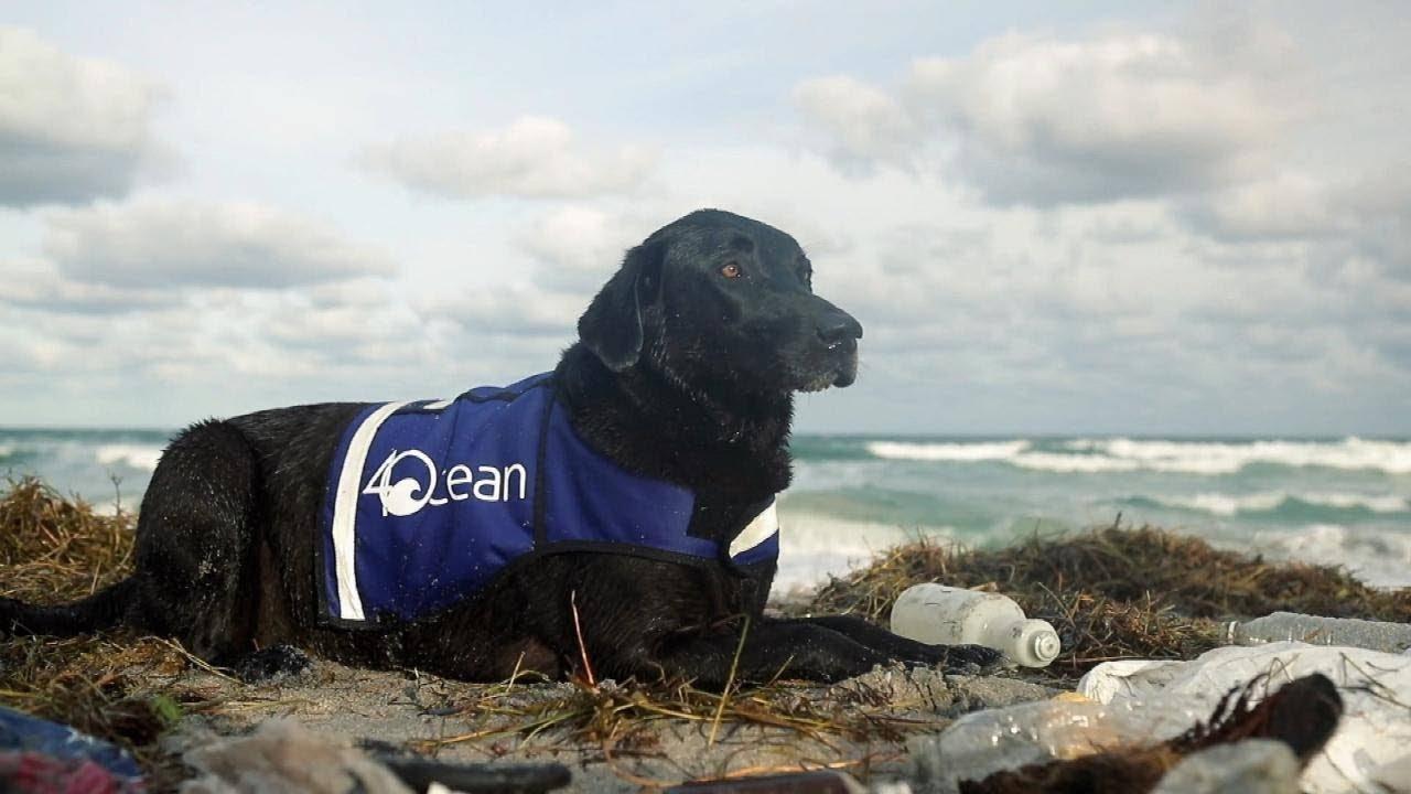 777.jpg?resize=648,365 - Cadela é treinada e ajuda a coletar garrafas plásticas e outros lixos do oceano