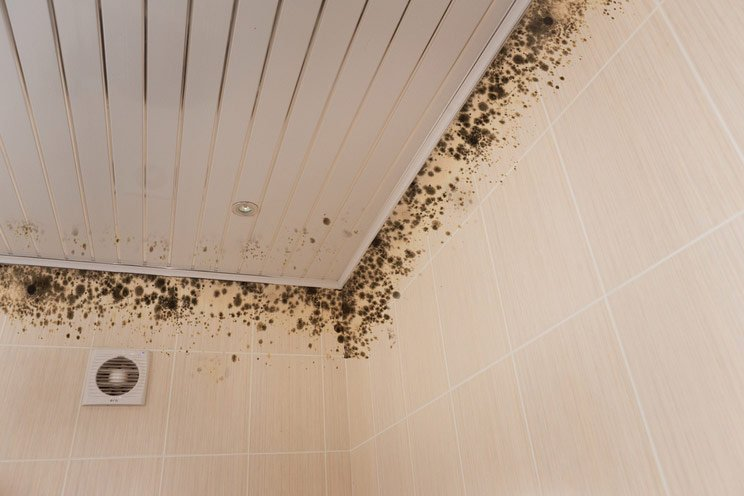 4-Black-Mold-Signs-and-Symptoms.-Visible-Growths-and-Odd-Colors.jpg