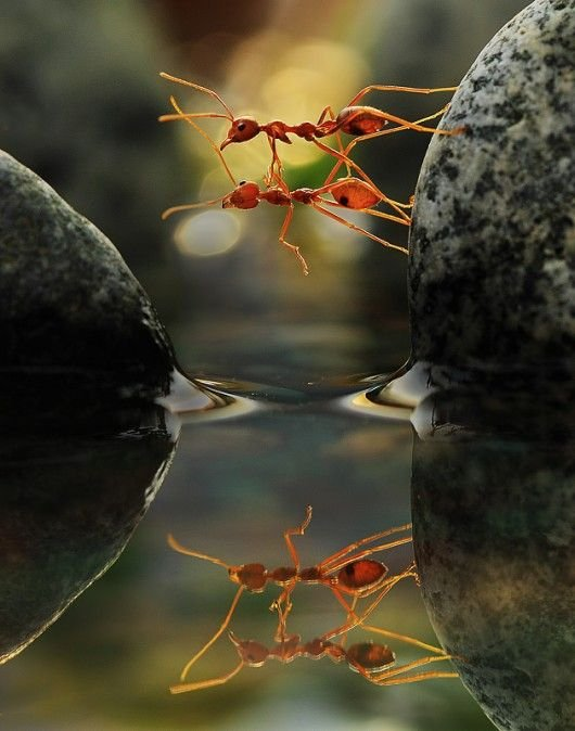 together we can make it - 2 ants