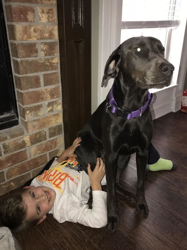Doggo Can't Stand When My Son Goes To School. She Sat On Him This Morning So He Wouldn't Leave