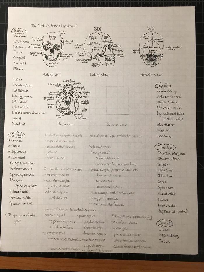 Some Of My Handwritten Anatomy Notes