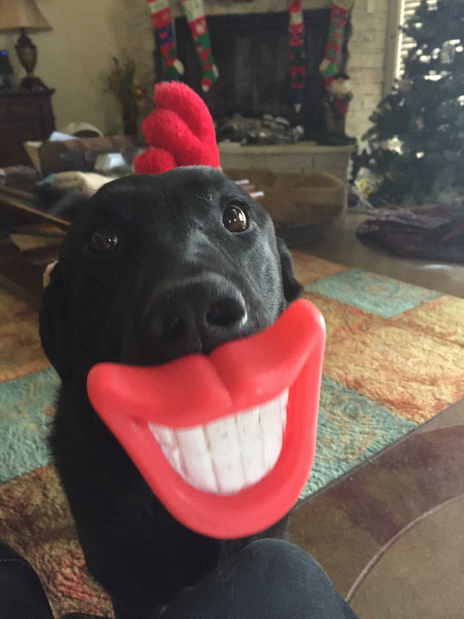 canine smile
