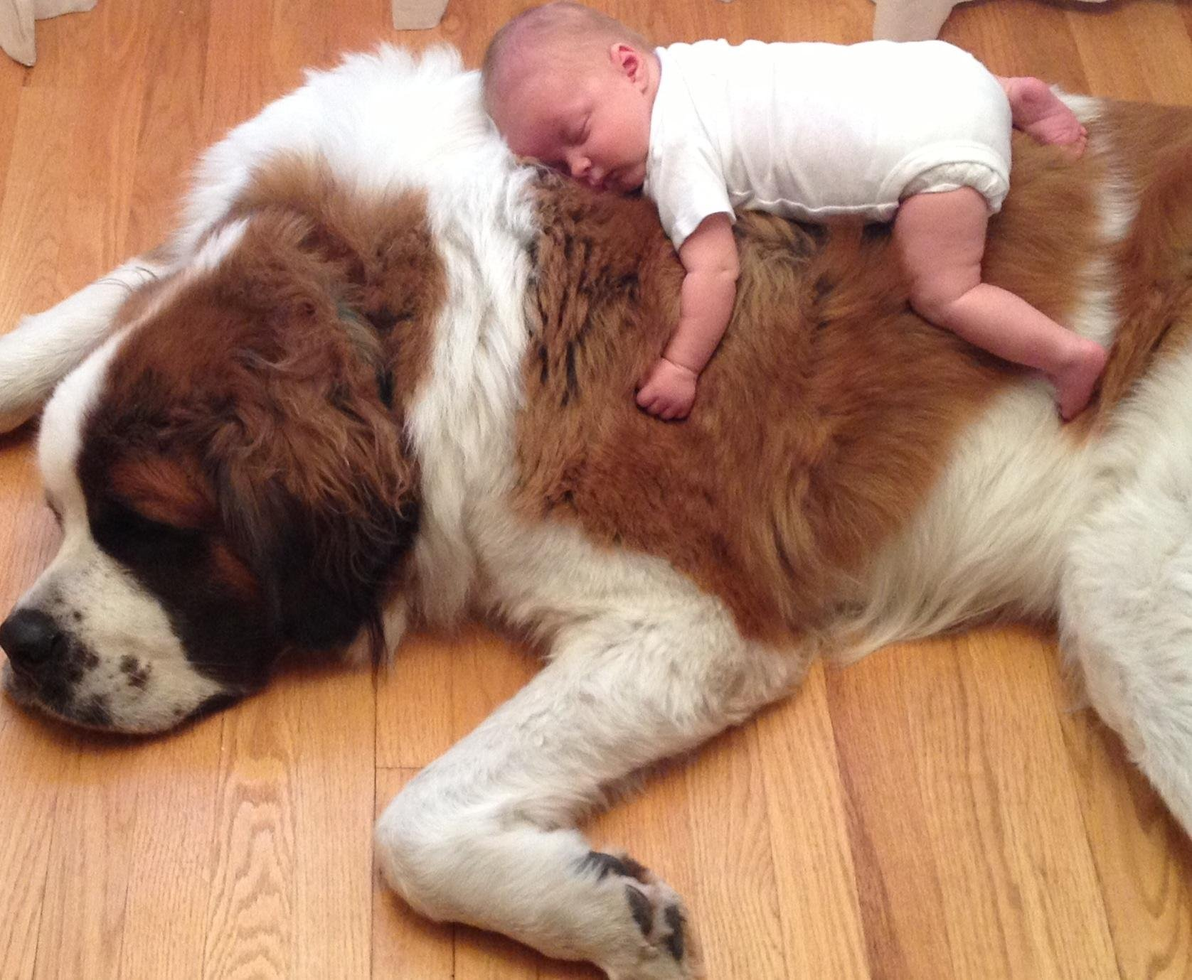 big dog, small child